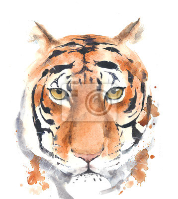 Tiger head Portret akwarela na białym tle