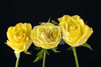 Tło żółte róże z zielonymi liśćmi.