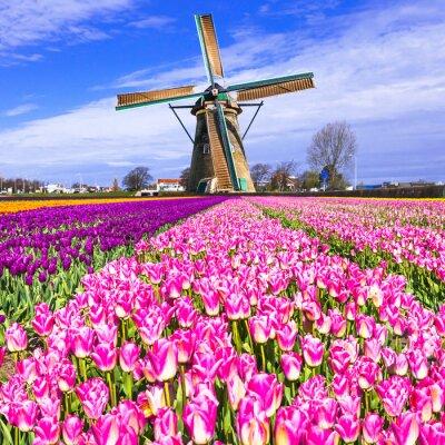 Obraz tradycyjnych Holland Wieś - wiatraki i tulipany