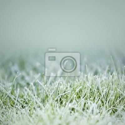 trawa na lodzie