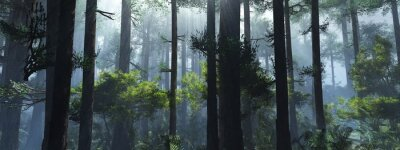 Obraz Trees in the fog. The smoke in the forest in the morning. A misty morning among the trees. 3D rendering