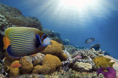 Obraz Tropical Fish na rafy koralowej
