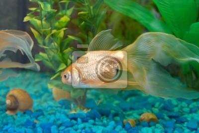 Tropical golden fish