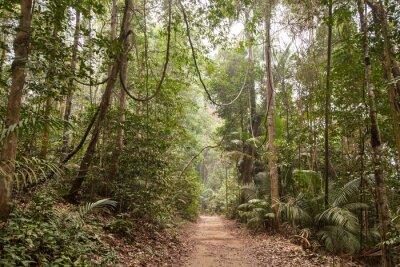 Obraz Tropikalne lasy deszczowe