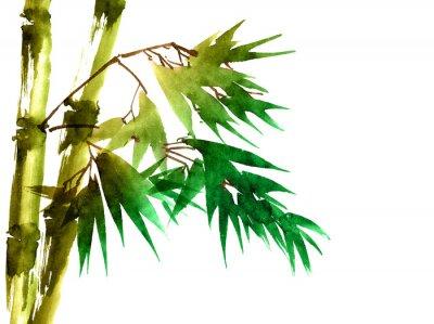 Obraz Tropikalny bambus z liśćmi