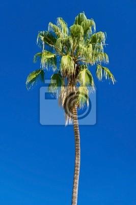 tropikalnych palm