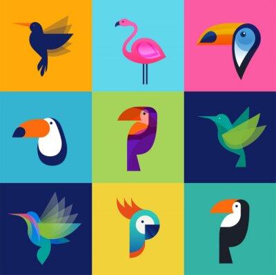 Obraz Tropikalnych ptaków - zestaw ikon wektorowych