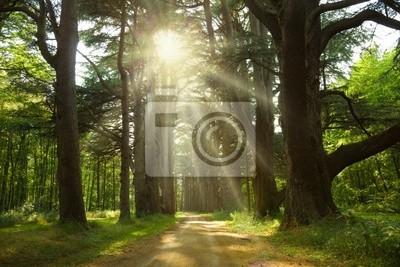 Trough cedry Sunlight Cheverny Chateau ścieżka w parku. Francja