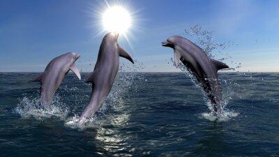Obraz Trzy delfiny