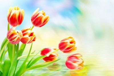 Obraz Tulipan kwiaty z bliska