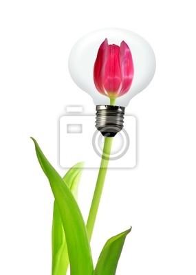 tulipan w żarówki