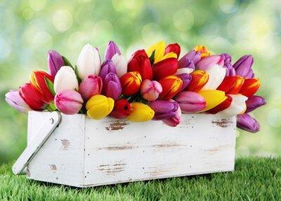 Obraz tulipany
