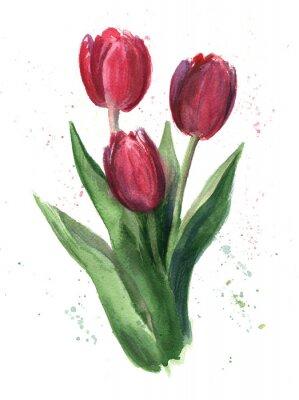 Obraz Tulipany, akwarela