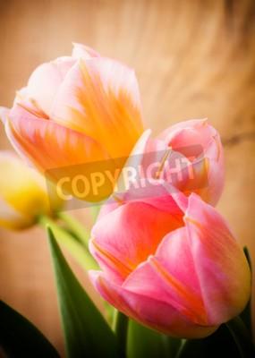 Obraz Tulipany, kwiatów tle.