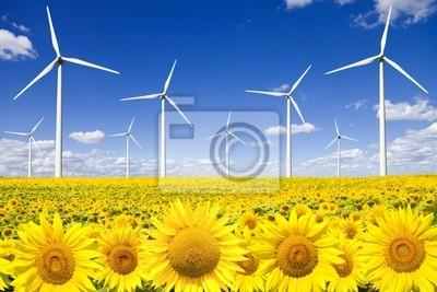 Turbiny wiatrowe na polu słoneczników