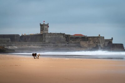 Two dogs playing at the Carcavelos Beach in a winter morning, in Portugal.