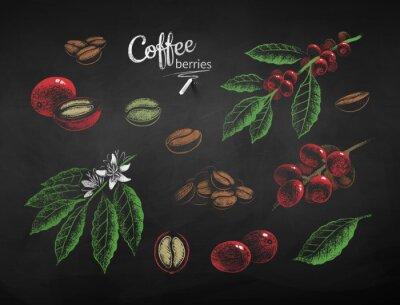 Obraz Vector chalk drawn set of coffee illustrations