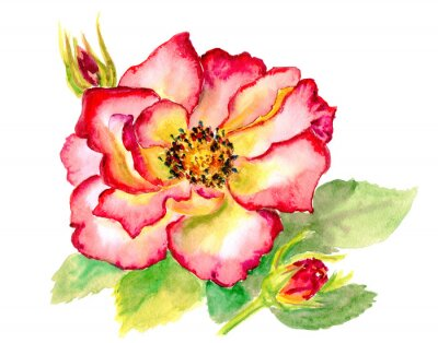 Obraz Vintage akwarela jasne czerwona róża