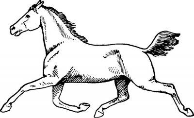 Obraz Vintage rysunek konia