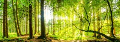 Obraz Waldpanorama z promieni słonecznych