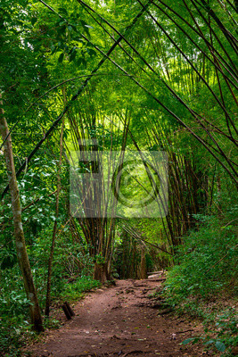 Walking trail in Western Thailand tropical forest