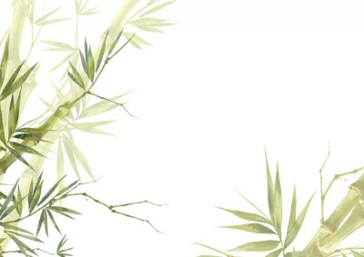Obraz Watercolor illustration painting of bamboo leaves , on white background