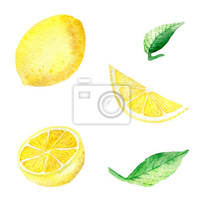 Watercolor painting banner of yellow lemons with green mint leaves isolated on white background. Watercolor hand painted illustration. Bright fruit and leaf pattern, Wallpaper or textile illustration.