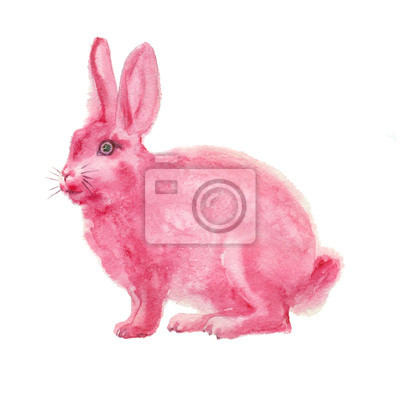 watercolor pink fluffy rabbit