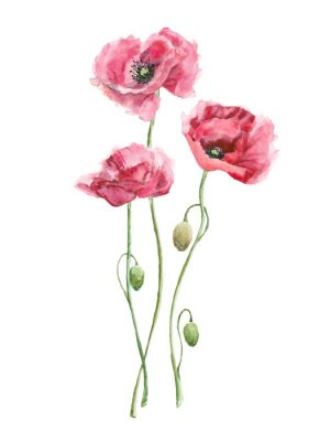 Obraz watercolor red flowers (poppies)