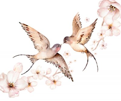 Obraz Watercolor spring flying swallows isolated and blossom flowers on white background