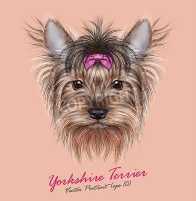 Obraz Wektor Portret psa domowego. Śliczne szef Yorkshire terrier na ping tle.