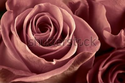 Obraz Wiązka marsala barwiąca róża kwitnie zakończenie jako tło. Nieostrość, płytkie DOF. Filtrowany obraz.