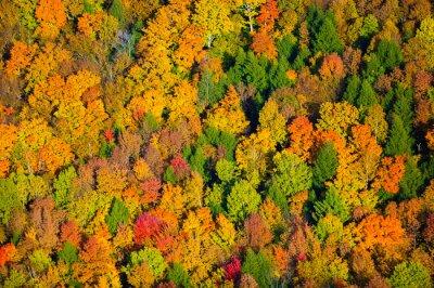 Obraz Widok z lotu ptaka spadek liści w Vermont.
