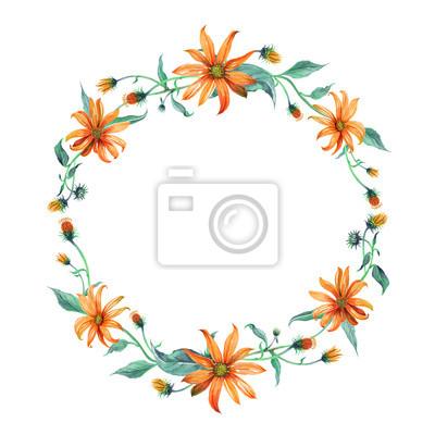 Wieniec Akwarela lub wianka. Żółte stokrotki z zielonymi liśćmi na białym tle. Może być używany jako zaproszenie lub karty z pozdrowieniami, drukowania reklamę.