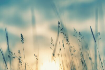 Obraz Wild grass in the forest at sunset. Macro image, shallow depth of field. Abstract summer nature background. Vintage filter