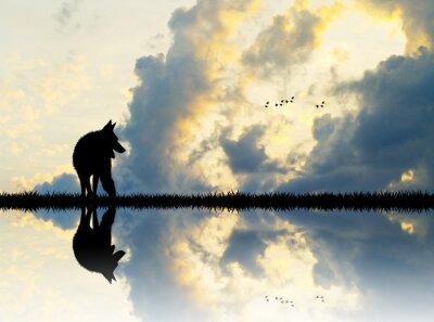 Obraz Wilk na rzece o zachodzie słońca