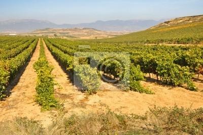 Winnica w jesienny, La Rioja (Spain)