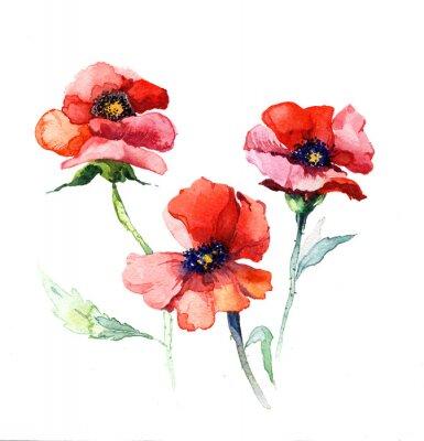 Obraz wiosenne kwiaty maku akwarela malowanie wyizolowanych na białym tle