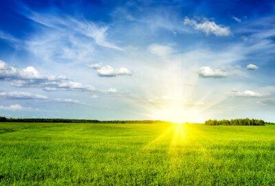 Obraz Wiosna dekoracje green field lanscape