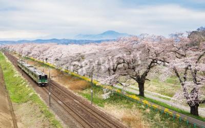 Obraz Wiśniowe kwiaty lub Sakura i lokalny pociąg