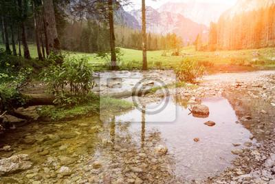 woda i drzewa