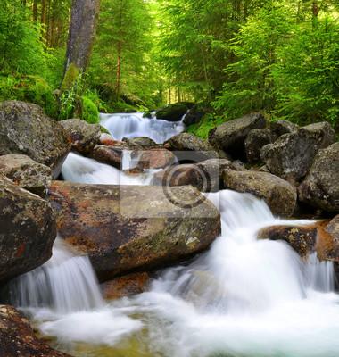 Wodospad na potoku górskiego lasu.