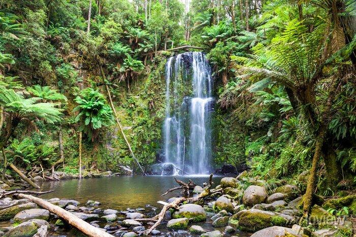 Obraz wodospad Tasmania