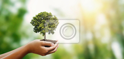 Obraz woman hand holding tree on blur green nature background. concept eco earth day