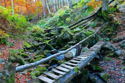 wooden bridge over brook in forest