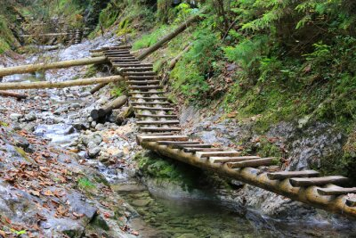 wooden stairs on pathway in mountain gorge