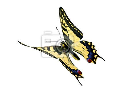 Obraz Wspólne (Papilio machaon) w locie