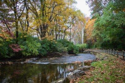 Obraz Wyomissing Creek surrounded by fall foliage near Reading, PA