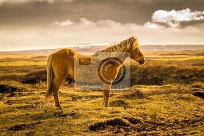 Wyspa Pferd