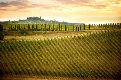 Obraz Wzgórza Chianti z winnicami i cyprysami. Krajobraz Toskanii między Sieną i Florencją. Włochy